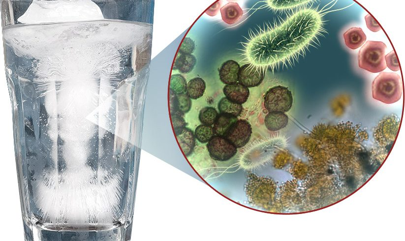 ice tap water with germs